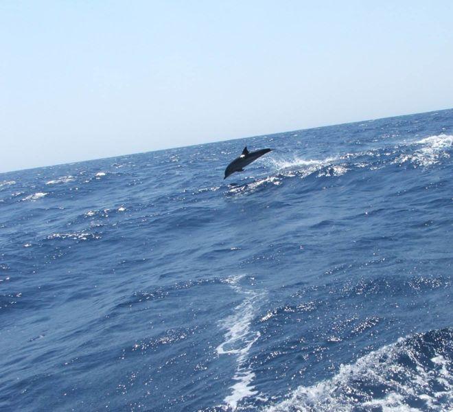 jedrenje-grcka-ionian-sailing-team-3